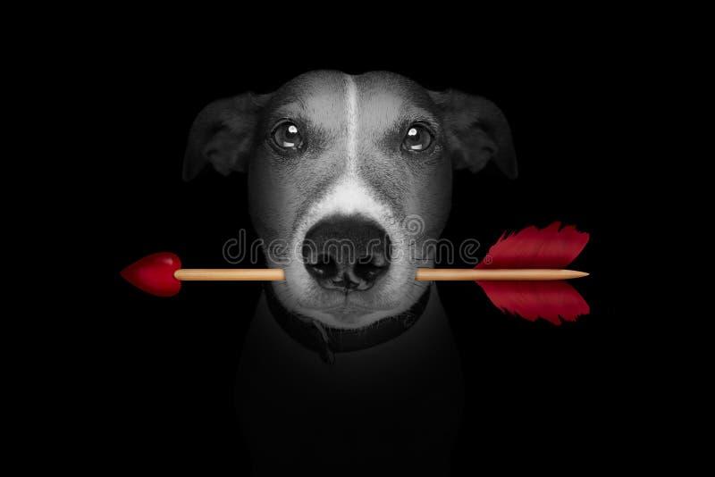 Tarjetas del día de San Valentín de la flecha de amor del perro imagenes de archivo