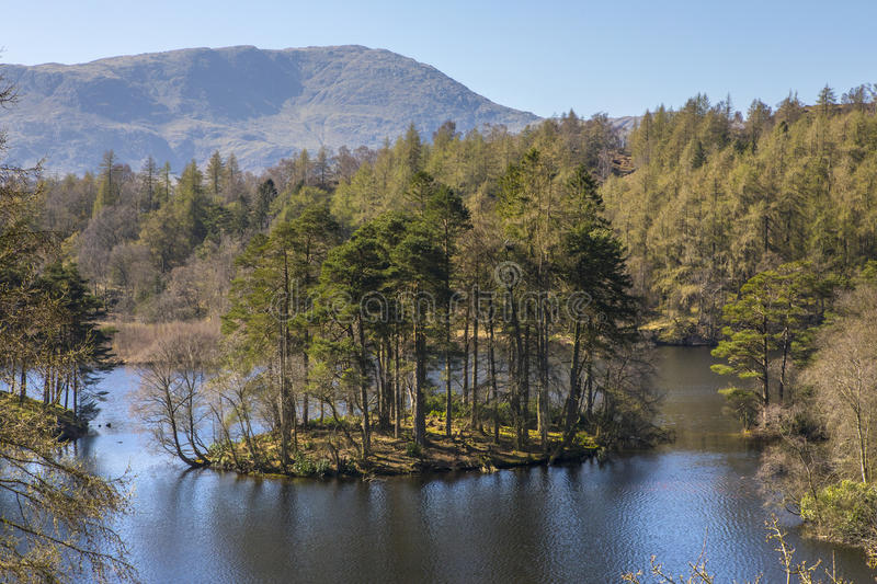 Tarn Hows in the Lake District. The picturesque scenery of Tarn Hows in the Lake District in Cumbria, UK royalty free stock photo