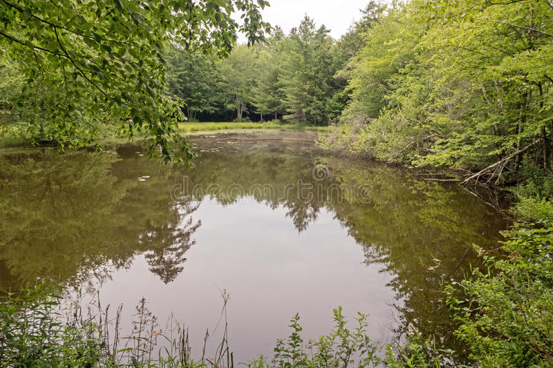 Tarn or small mountain lake. In Catskill State Park and Forest Preserve, Haines Falls New York royalty free stock photography