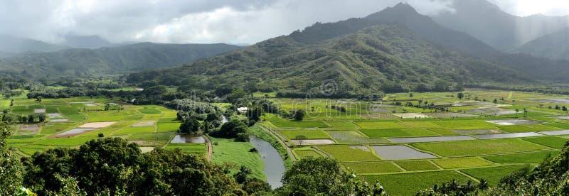 Taro αγροκτήματα στοκ φωτογραφίες με δικαίωμα ελεύθερης χρήσης