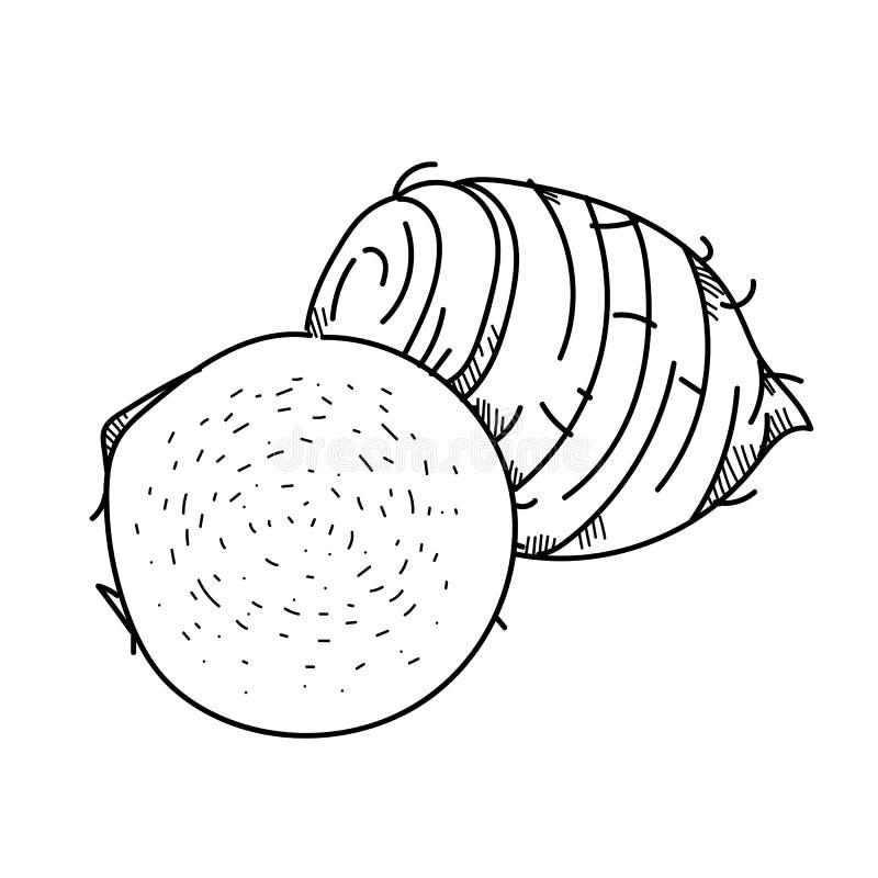 Taro della verdura dell'illustrazione del disegno a mano libera royalty illustrazione gratis