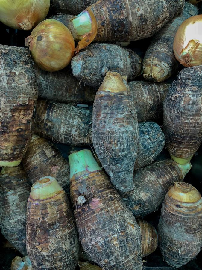 Taro farm agriculture background food fresh group natural organic.  royalty free stock photos