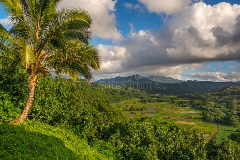 Taro fields in beautiful Hanalei Valley Kauai, Hawaii royalty free stock photography