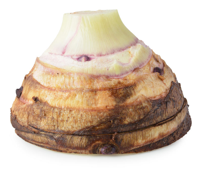 Taro isolato su fondo bianco fotografie stock