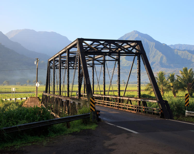 Taro plants at Hanalei Bridge stock image