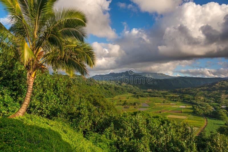 Tarofält i den härliga Hanalei dalen Kauai, Hawaii royaltyfri fotografi