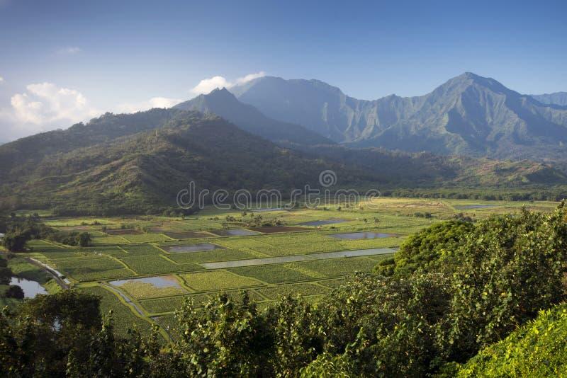 Tarofält i den Hanalei dalen, Kauai, Hawaii arkivbild