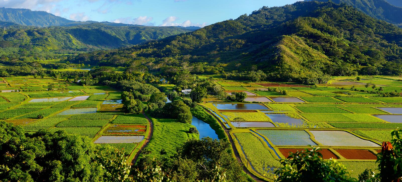 Tarogebieden in mooie Hanalei-Vallei op Kauai stock afbeeldingen