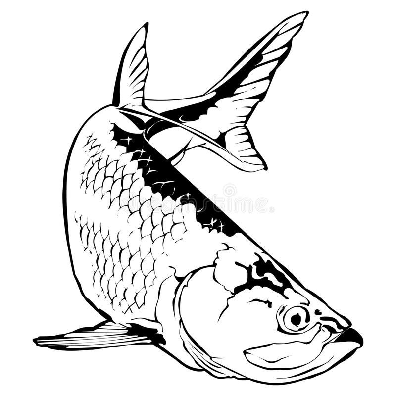 Tarpon Illustration. Tarpon Vector Illustration in monochrome royalty free illustration