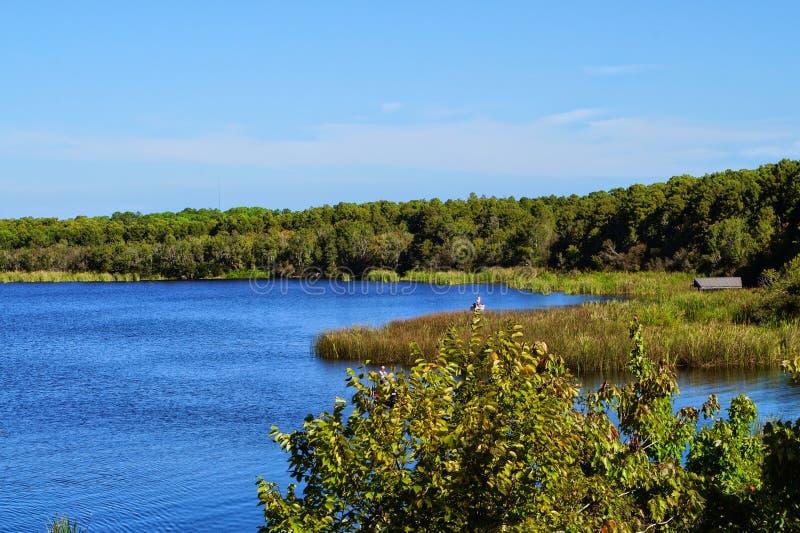 Tarpone del lago un bello giorno di Florida fotografia stock libera da diritti