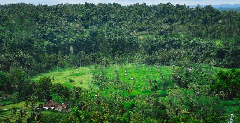 Tarraces риса и некоторые хаты, Sideman, Бали, Индонезия стоковые фотографии rf