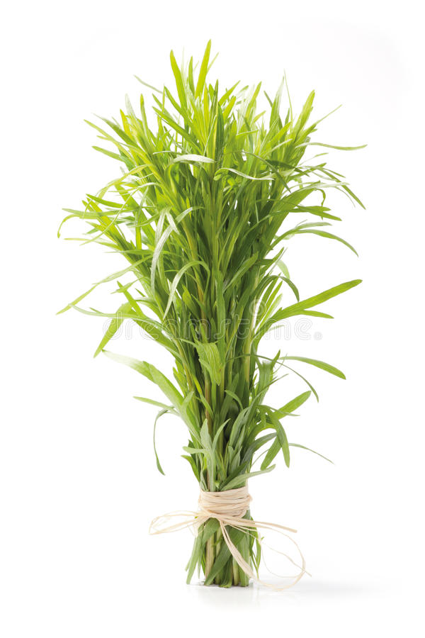Download Tarragon herb bunch stock photo. Image of botany, organic - 25436878