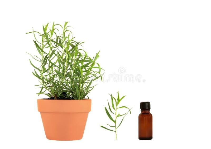 Download Tarragon Herb Essential Oil Stock Image - Image: 9125709