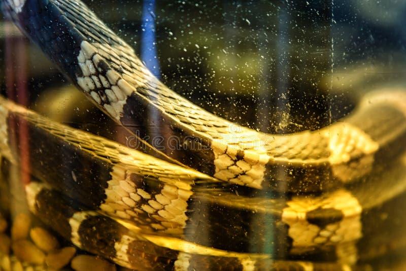 Tarro de la serpiente fotografía de archivo