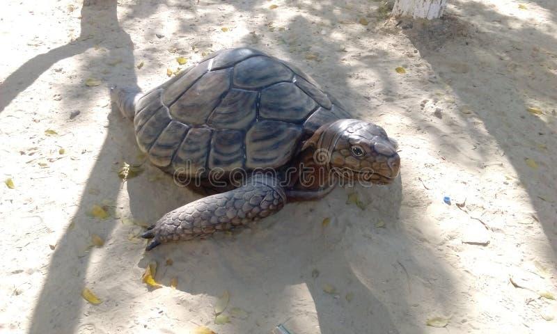 Tartaruga foto de stock