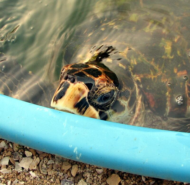 Tartaruga fotografia de stock