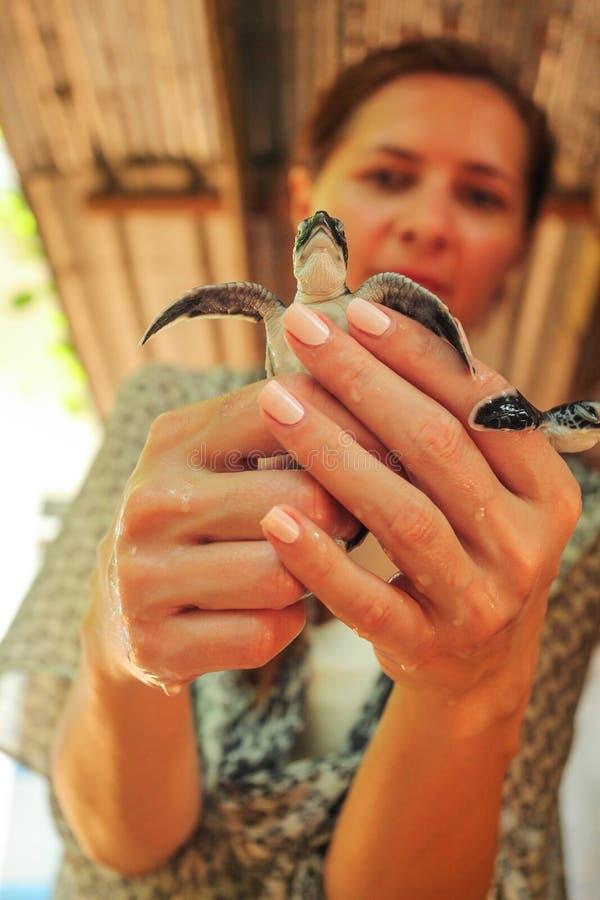 Tartaruga chocada terra arrendada da jovem mulher em suas mãos fotos de stock