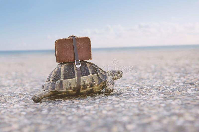 Tartaruga con la valigia fotografia stock