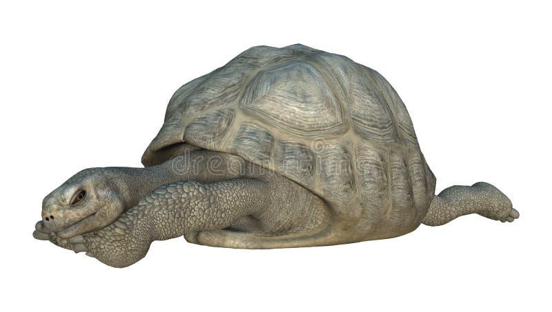 Tartaruga de Galápagos ilustração royalty free