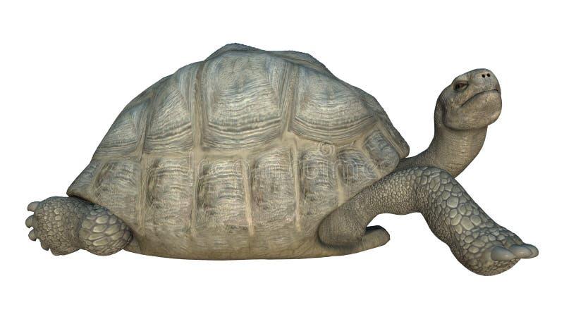 Tartaruga de Galápagos ilustração do vetor