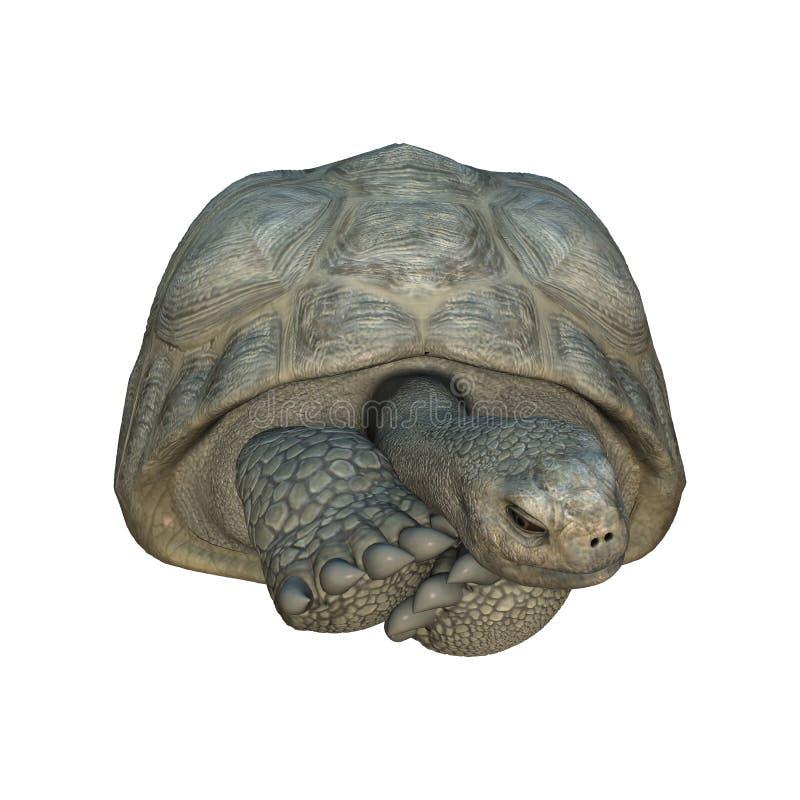 tartaruga de Galápagos da tartaruga da rendição 3D no branco ilustração do vetor