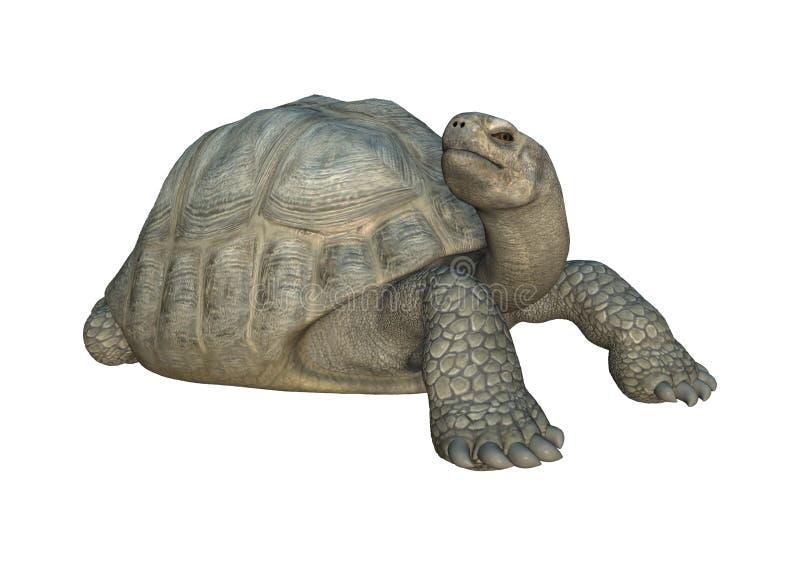 tartaruga de Galápagos da tartaruga da rendição 3D no branco ilustração royalty free