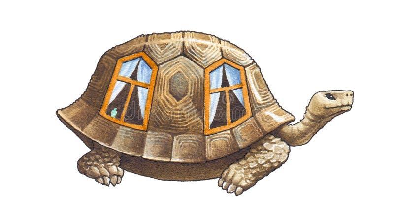 Tartaruga de Galápagos e tartarugas gigantes ilustração royalty free