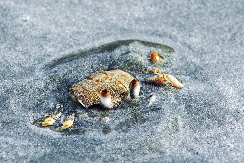 Tartaruga de mar e peixes do vidro, recife de corais fotografia de stock royalty free
