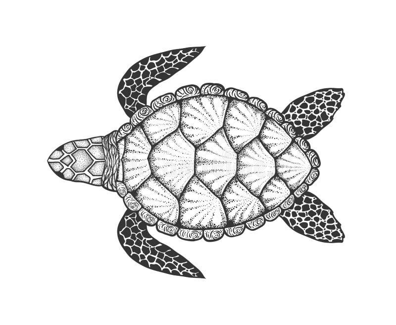 Tartaruga de mar na linha estilo da arte Ilustração desenhada mão do vetor Projeto para o livro para colorir Grupo de elementos d ilustração stock