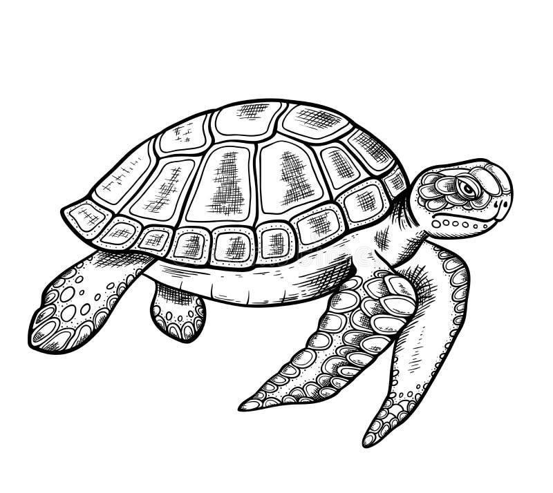 Tartaruga de mar tirada mão ilustração do vetor