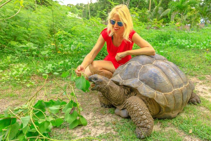 Tartaruga de Seychelles da mulher fotos de stock royalty free