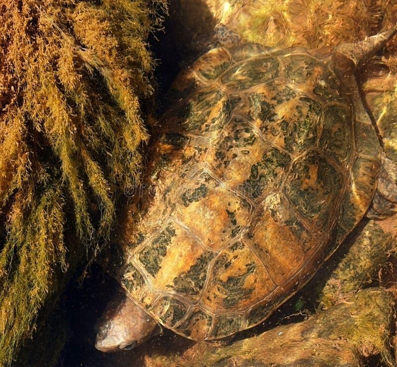 Tartaruga della montagna nella valle fotografia stock libera da diritti