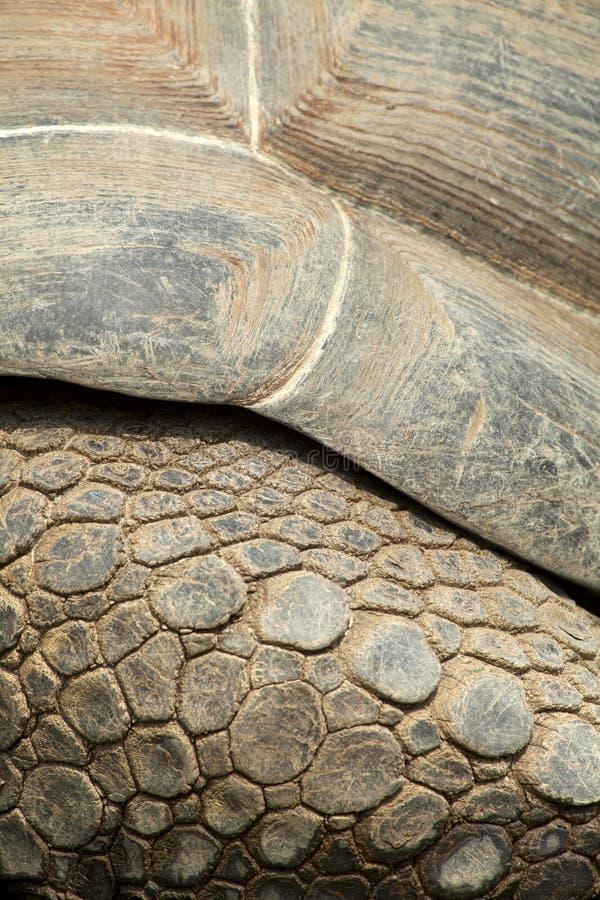 Tartaruga di Galapagos immagini stock