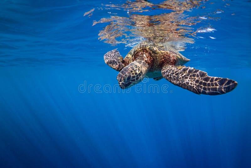 Tartaruga di superficie fotografie stock libere da diritti