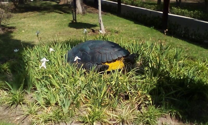 tartaruga entre plantas fotografia de stock
