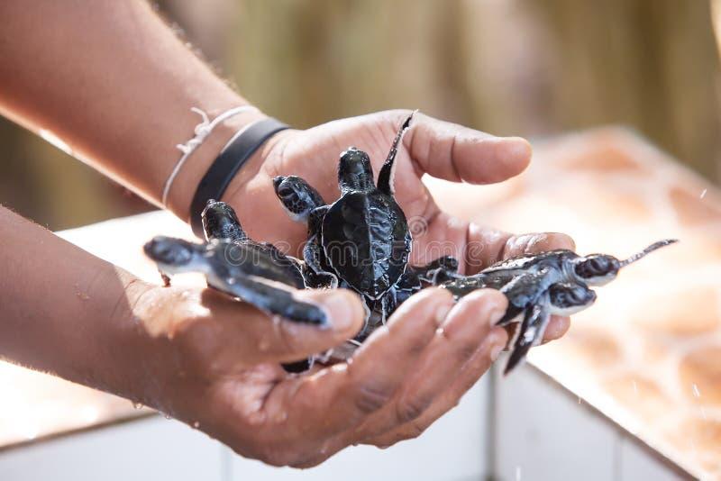 Tartaruga recentemente covata dei bambini fotografia stock