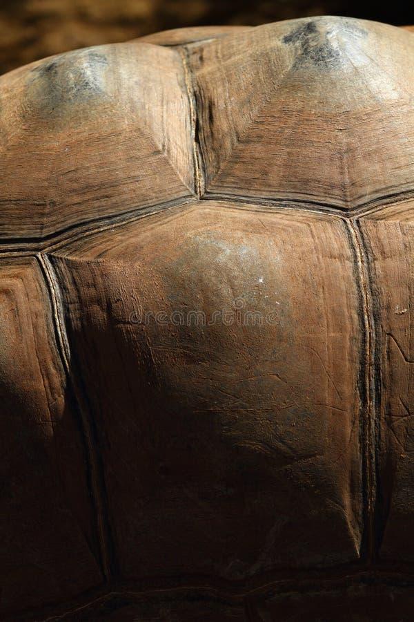 Tartaruga Shell Detail imagens de stock royalty free
