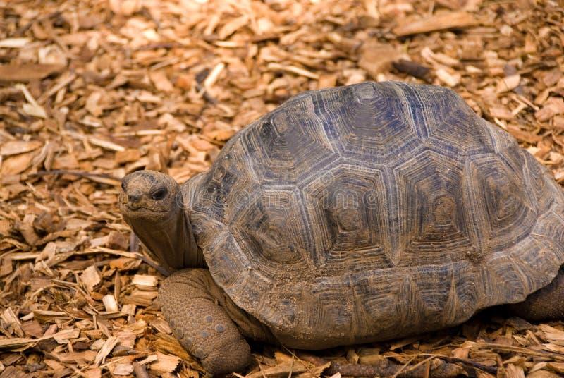 Tartaruga sorridente fotografia stock libera da diritti