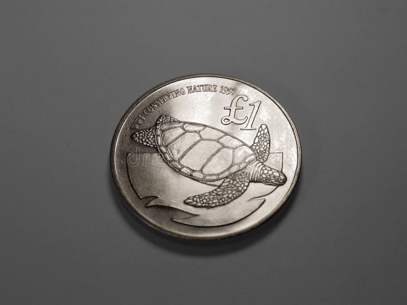Tartaruga sulla moneta fotografia stock