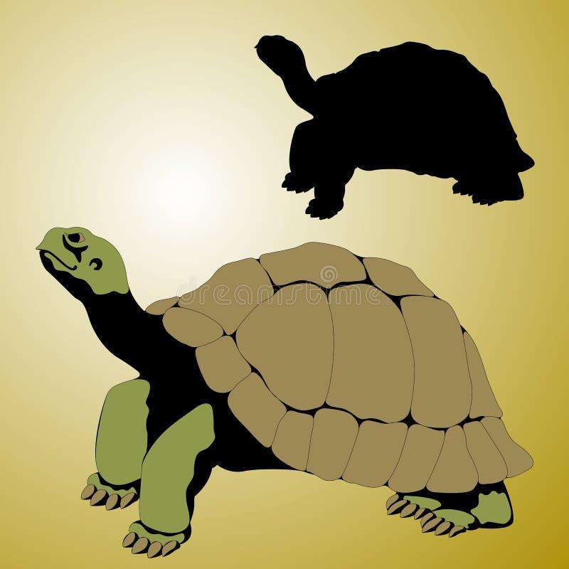 Tartaruga velha realística ilustração royalty free