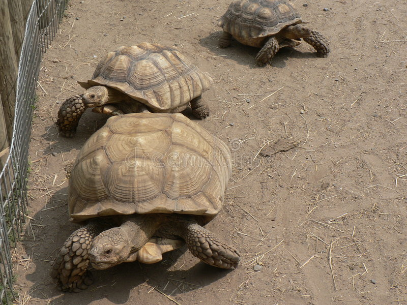 Tartarugas fotos de stock