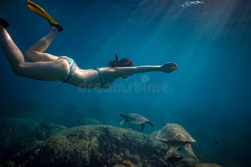 Tartarugas de observação mergulhando fêmeas da menina debaixo d'água fotos de stock