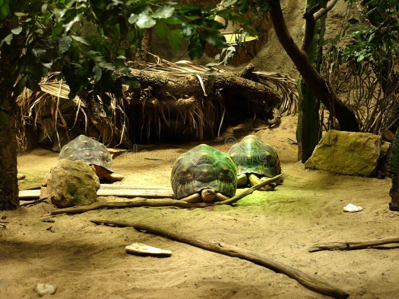 Tartarugas em um aquário em Berlin Germany imagem de stock royalty free