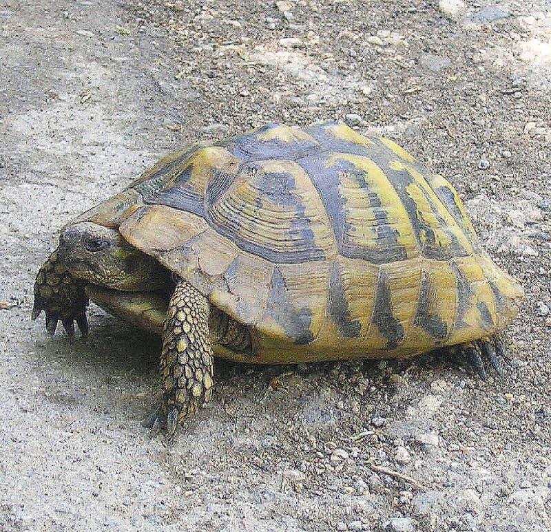 Tartarugas na estrada no animal místico e sábio da floresta foto de stock royalty free