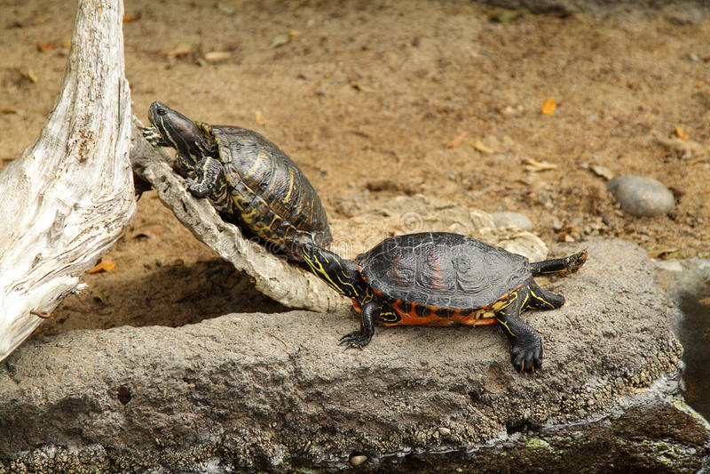 Tartarugas no jardim zoológico fotografia de stock royalty free