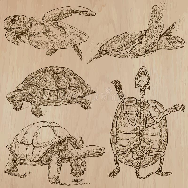 Tartarugas - um bloco tirado mão do vetor ilustração royalty free