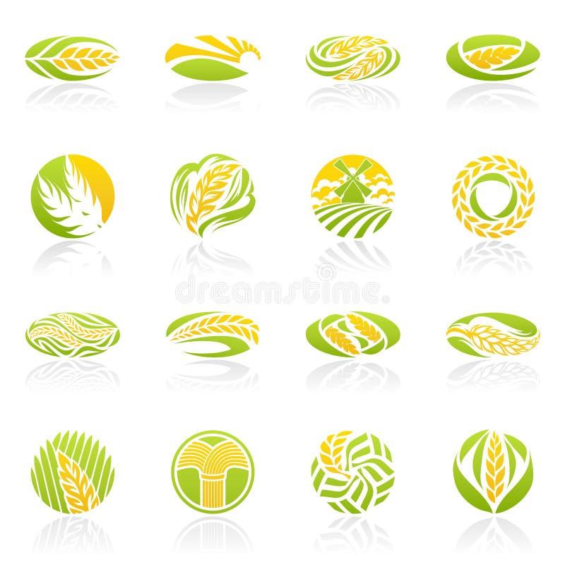 Tarwe en rogge. De vector reeks van het embleemmalplaatje. vector illustratie