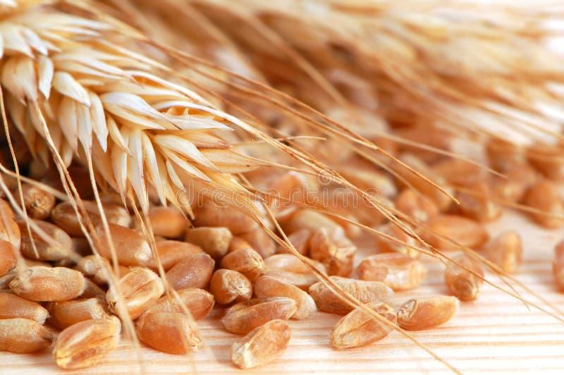Tarwe met zaden royalty-vrije stock afbeelding