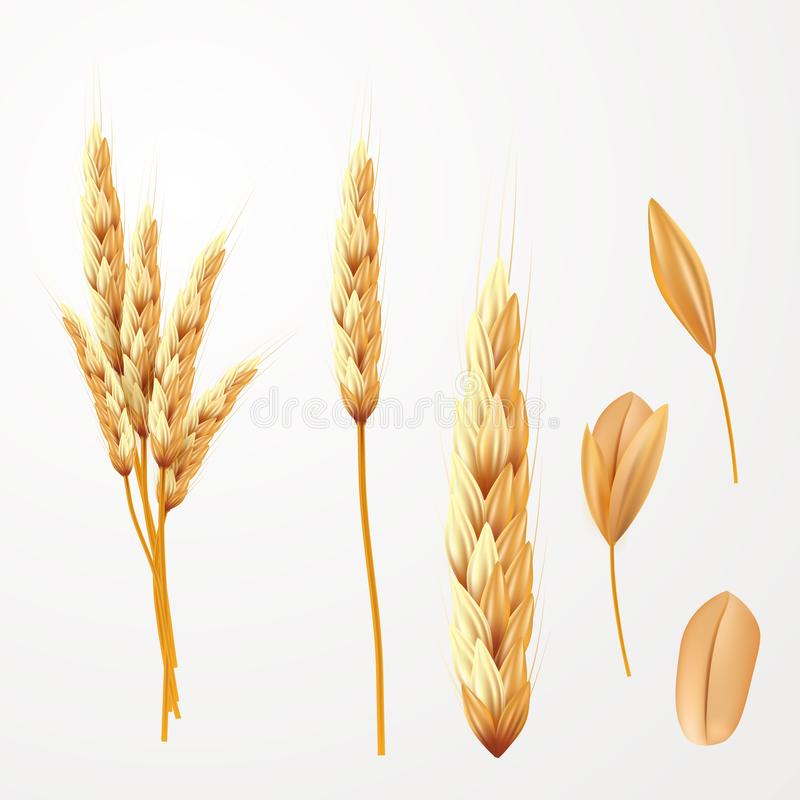 Tarwe vectorillustratie Bos van geïsoleerde tarweoren en zaad vector illustratie