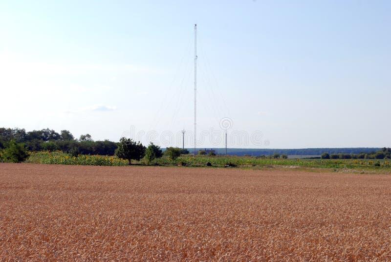 Tarwegebied en antenne voor cellulaire mededeling royalty-vrije stock afbeeldingen